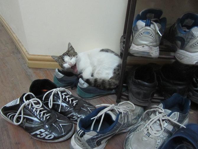 'گربه ناقلا