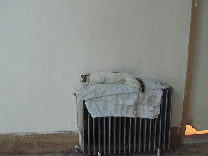 گربه ناقلا